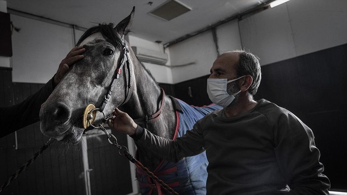 Milyon dolarlık safkan atlar bu hastanede özenle tedavi ediliyor