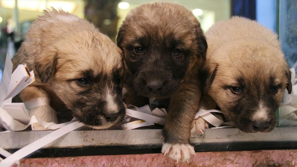 Hayvanların korunmasına ilişkin düzenleme yasalaştı