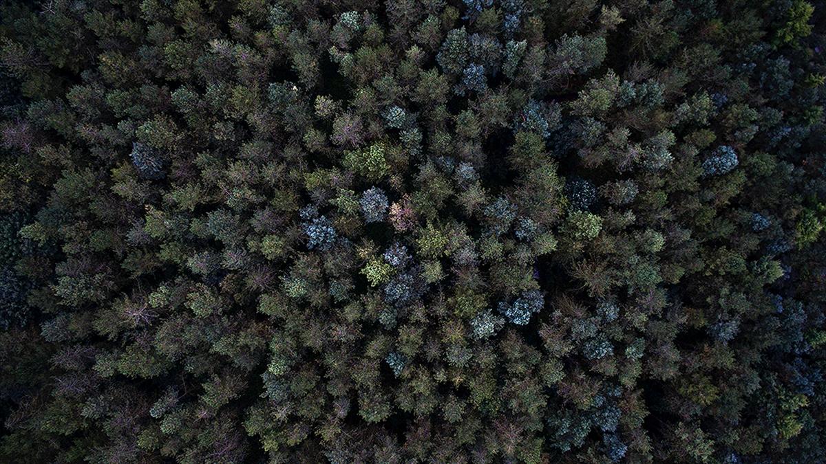 Afrika'da 7 milyardan fazla yeni ağaç tespit edildi